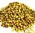 Corriander Seed