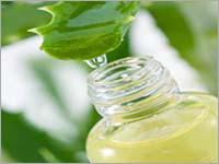 Aloe Vera Herbal Extract