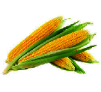 Yellow Maize Corn