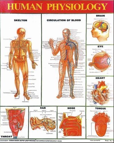 CHARTS, HUMAN PHYSIOLOGY