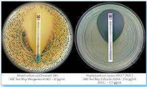 Amoxicillin*-clavulanic acid (2/1) 0.016 - 256*