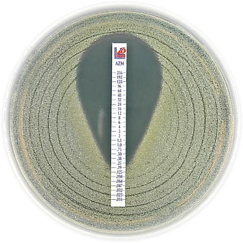 Ampicillin 0.016 – 256