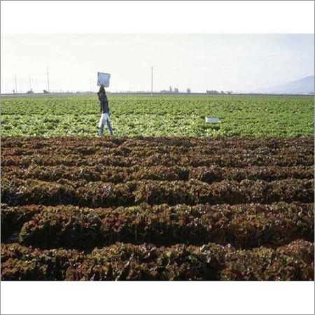 Enriched Organic Fertilizer