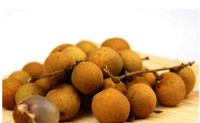 Lychee Tree Seed