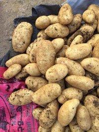 Spunta Potato