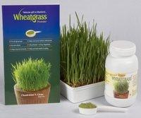 Wheatgrass Powder Bottle