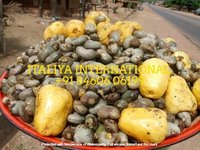 Indian Raw Cashew Nut