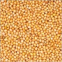 Yellow Mustard Seeds