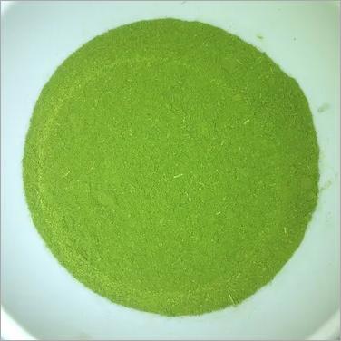 Conventional Moringa Oleifera Leaves Powder