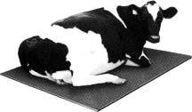 Rubber Cow Matting