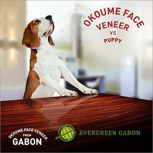 Okoume Face Veneer Vs Puppy