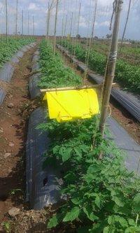 Tomato Leafminer Lure