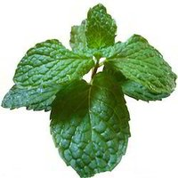 Spray Dried Mint Powder
