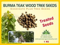 Burma Teak Wood Tree Seeds