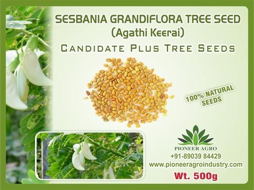 Sesbania Grandifora Tree Seed
