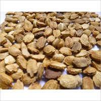 Fresh Bitter Gourd Seeds