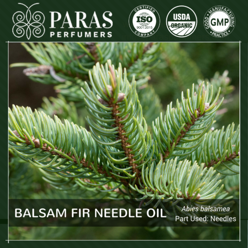 Balsam Fir Needle Oil