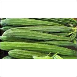 Turai Seeds