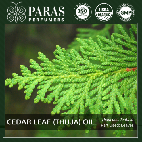 Cedar Leaf (Thuja) Oil