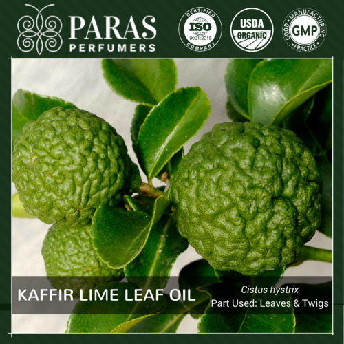 Kaffir Lime Leaf Oil