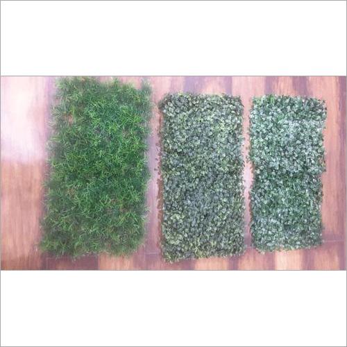 Boxwood Grass