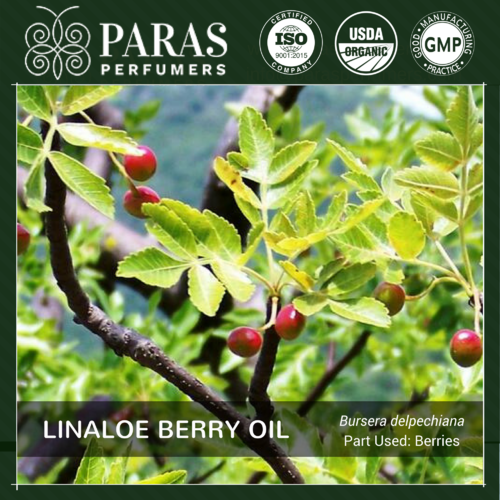 Linaloe Berry Oil