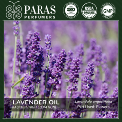 Lavender Oil Kashmir (High Elevation)