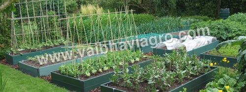 Vegetable Bed