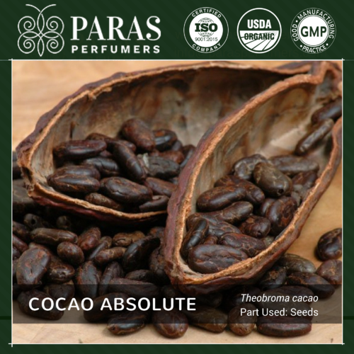 Cocao Absolute
