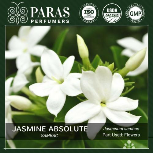 Jasmine Sambac Absolute