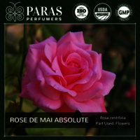Rose de Mai Absolute
