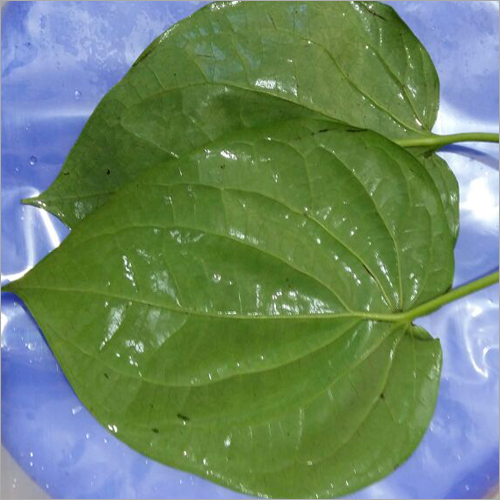 Bangla Paan Leaf