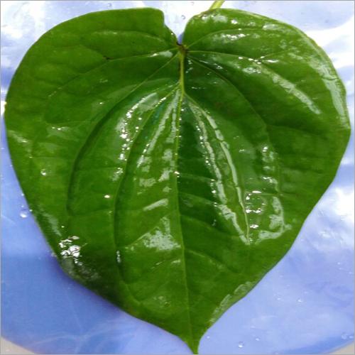 Organic Bangla Leaf
