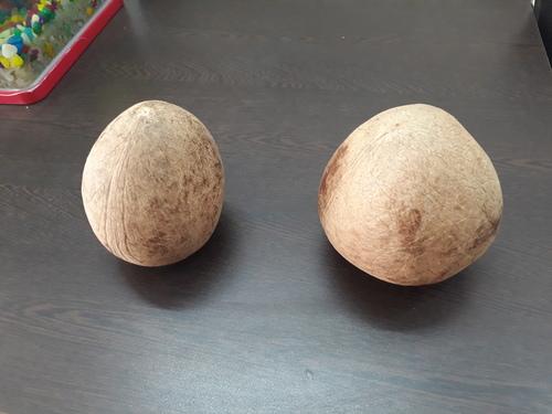 whole dry coconut copra
