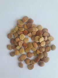Gliricidia Sepium Tree Seeds