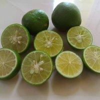Lemon Plant (LebuLime)