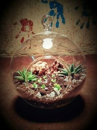 Traditional Pot Shaped Glass Terrarium Pot Traditional Pot Shaped