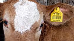 Dairy Farm Equipment