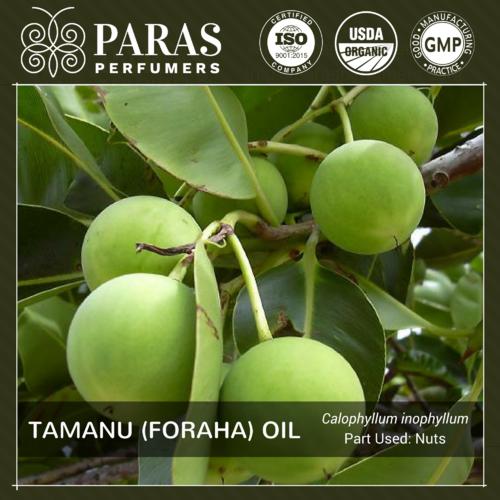 Tamanu (Foraha) Oil