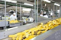 Food Processing Plant Material Handling Equipment