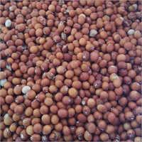 Toor Seeds