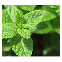 Spearmint Oil 60%