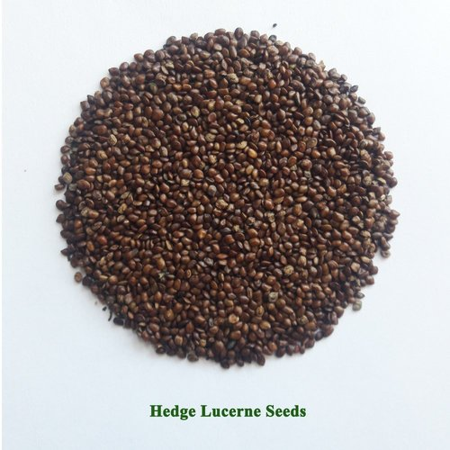 Hedge Lucerne Seeds