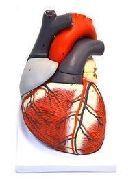 GIANT HUMAN HEART MODEL