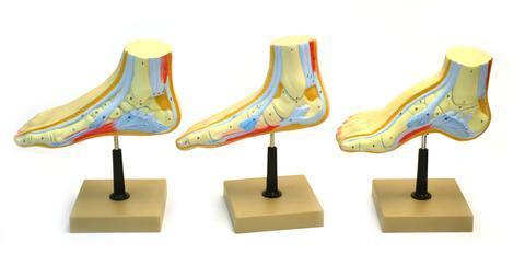 Human Feet Model Set