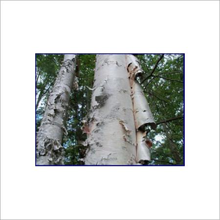 Birch Tar Oil