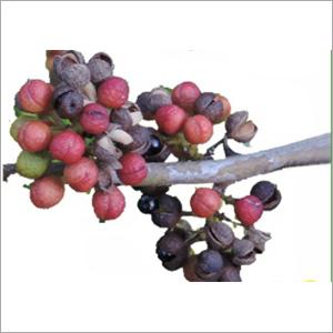 ZANTHOXYLUM OIL (Tomar Seed)