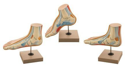 MODEL HUMAN FOOT BOW - SET OF 3