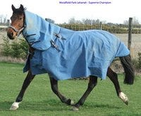 Horse Canvas Rugs