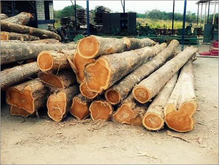 Teak Hardwood Logs